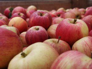 Wurbs frische Äpfel